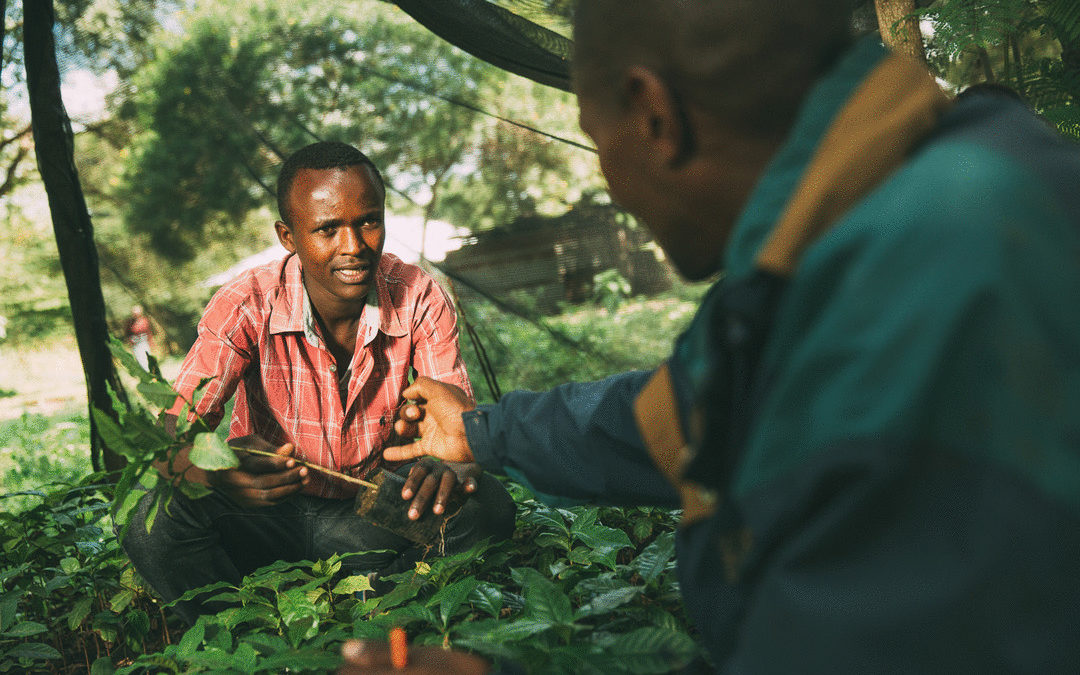 There's No Shortcut To Sustainable Coffee