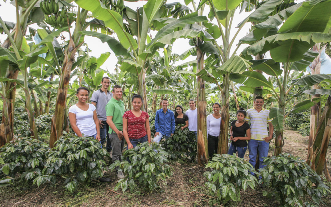 Can smallholder coffee farming be sustainable? German vineyards might give some answers…