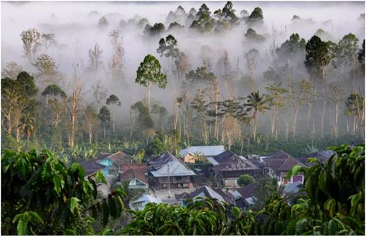 Tackling Deforestation in Indonesia