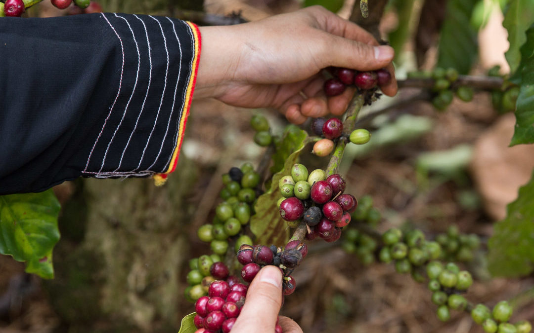 Conference: The Future of Coffee Cultivation