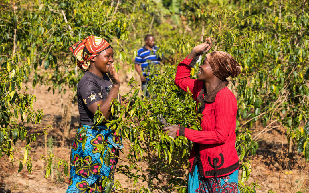 Brewing up Climate Resilience in the Coffee Sector