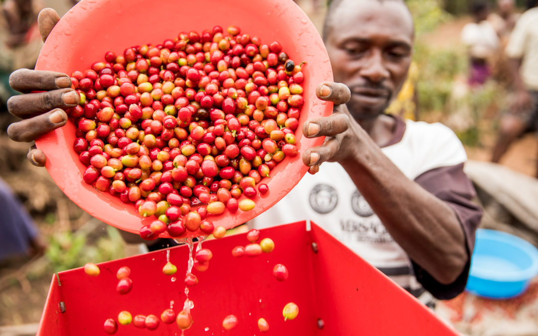 An 'anti-green-washing-checklist'​ for coffee practitioners