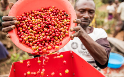 Climate – Smart Coffee in Uganda